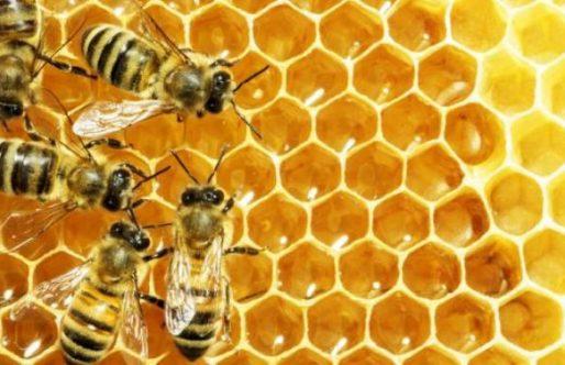 Bijen en beestjes maken bij de timmerbende